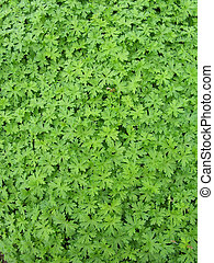 carpet of leaves - natural leaves background or texture