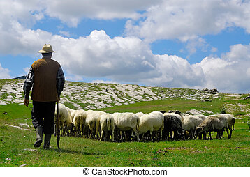 Shepherd with his sheep on pasture with blue sky and clouds