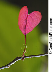 ant carrying - an ant carrying red leaf design in love and...
