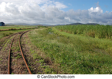 Narrow-gauge railway in sugar cane area