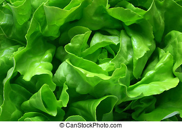 Lettuce Close-up - Full frame close up photo of a Butter...