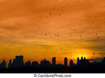 Manhattan with birds flying - New York Skyline at Dusk with...
