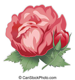 Red Damask Rose Flower