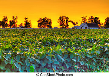 Country sunset - Beautiful sunset at a farm in Central...