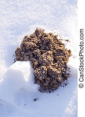 new molehill on snow - new molehill on winter snow