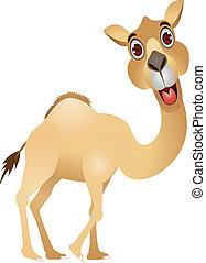 funny camel cartoon - illustration of funny camel cartoon