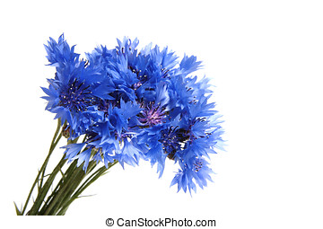 Bunch of cornflowers