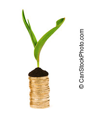 stack of coins and plant