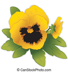 Golden Pansy Flowers - Gold Pansy flowers (Viola tricolor...