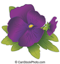 Purple Pansy Flowers - Purple Pansy flowers Viola tricolor...