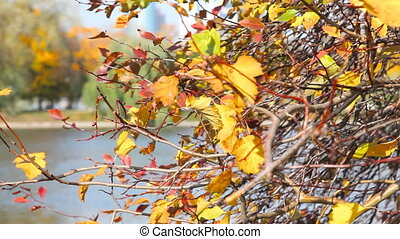 Autumnal leaves - Novodevichy Convent  pound