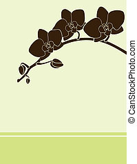 Orchid card green - Vector green postcard with brown orchid