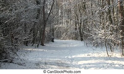 Man walking in a snowy wood.
