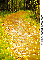 lane covered with yellow foliage in city park in autumn...