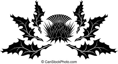 Thistle ornament on white background