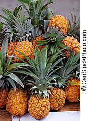 The Sukkoth. Pineapples - The picturesque holiday bazaar...