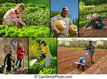 farming collage - various farming activities at the small...