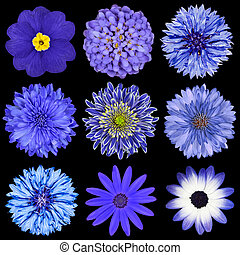 Selection Blue Flowers Selection Isolated on Black - Various...