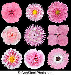 Collection of Pink White Flowers Isolated on Black