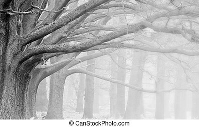 Landscape of forest in fog during Winter Autumn Fall in black and white