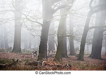 Fallow deer in foggy Winter forest landscape