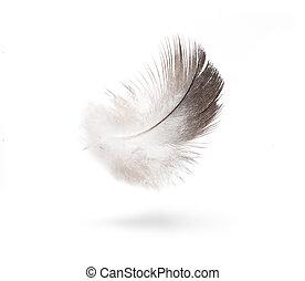 arte, paloma, blanco, plumas, aislado, blanco, Plano de...