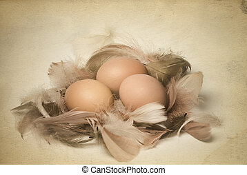 Vintage photo of eggs and feathers - Old postcard of easter...