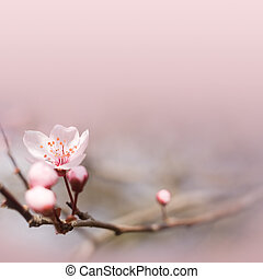 Delicate pink spring flower - Spring header or footer with...