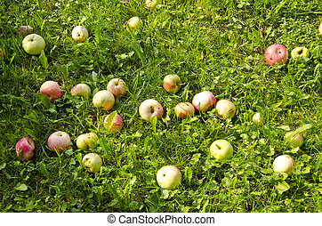 summer apples on grass