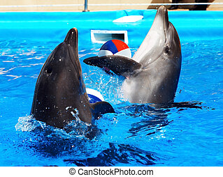 Dolphin in blue water. - Dolphin with ball in blue water.