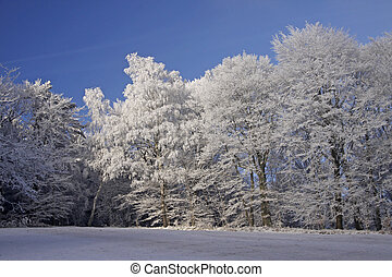 Trees with hoarfrost in winter, Georgsmarienhuette, Lower...