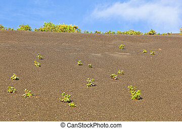 sparse vegetation on volcanic hills in Timanfaya National Park with route