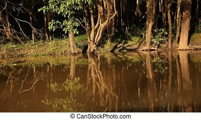 Trees At Amazon River