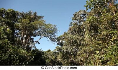 Trees At Amazon River - Shipping On Amazon River