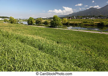 River and summer grass