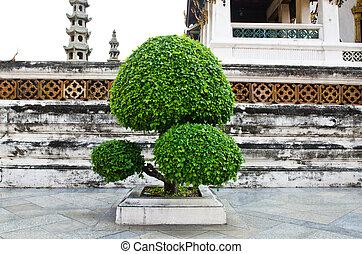 Tree At Wat