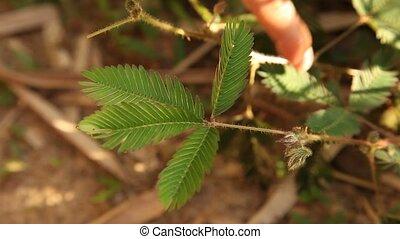 Plant In Amazon Area