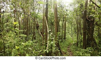 Rain Forest - Trees In Rain Forest