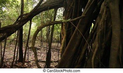 Jungle - Rain Forest, Peru