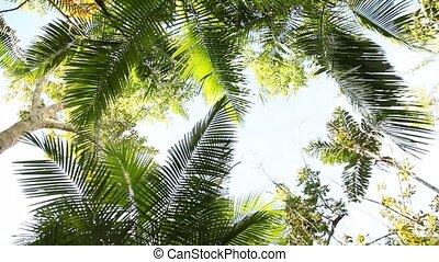 Rain Forest, Peru
