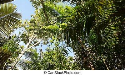 Jungle With Palms - Rain Forest, Peru