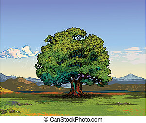 Oak tree - A single oak tree on a beautiful day