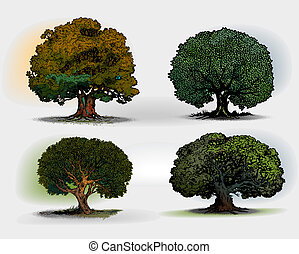 trees - Trees isolated on white background