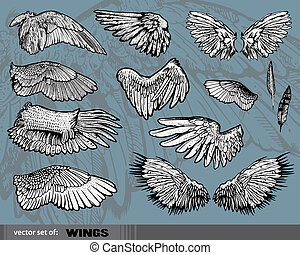 Wings isolated on gray background
