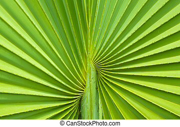 Palm tree leaf background - Closeup of Green Palm tree leaf...