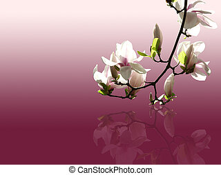 magnolia - a magnolia twig with copy space