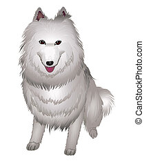 white Samoyed dog smiles.