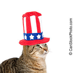 Cute cat with Fourth of July hat - Cute pet tabby cat with...