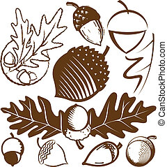 Acorn Collection - A clip art collection of various acorn...