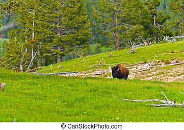Yellowstone, krajobraz